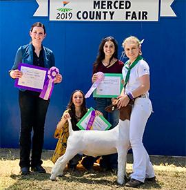 Asmus Club Lambs | Winners